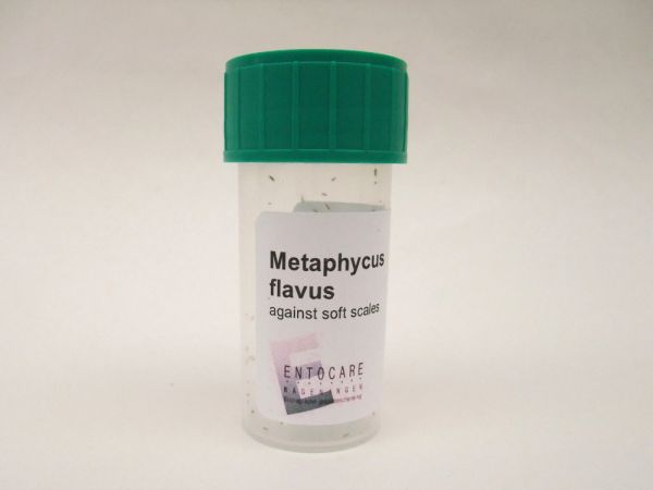METAPHYCUS-ADULTS-PRODUKT01-WEB