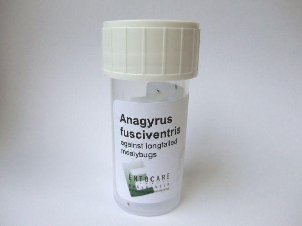 ANAGYRUS-25-PRODUKT-WEB